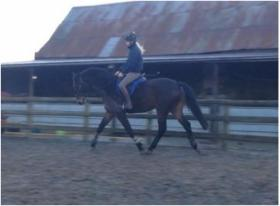 See Dressage Horses for sale