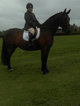 Dressage Horses for sale