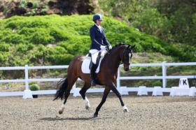 For sale: outstanding KWPN mare