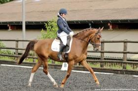 For sale: Smart low mileage mare, 65+ BD points